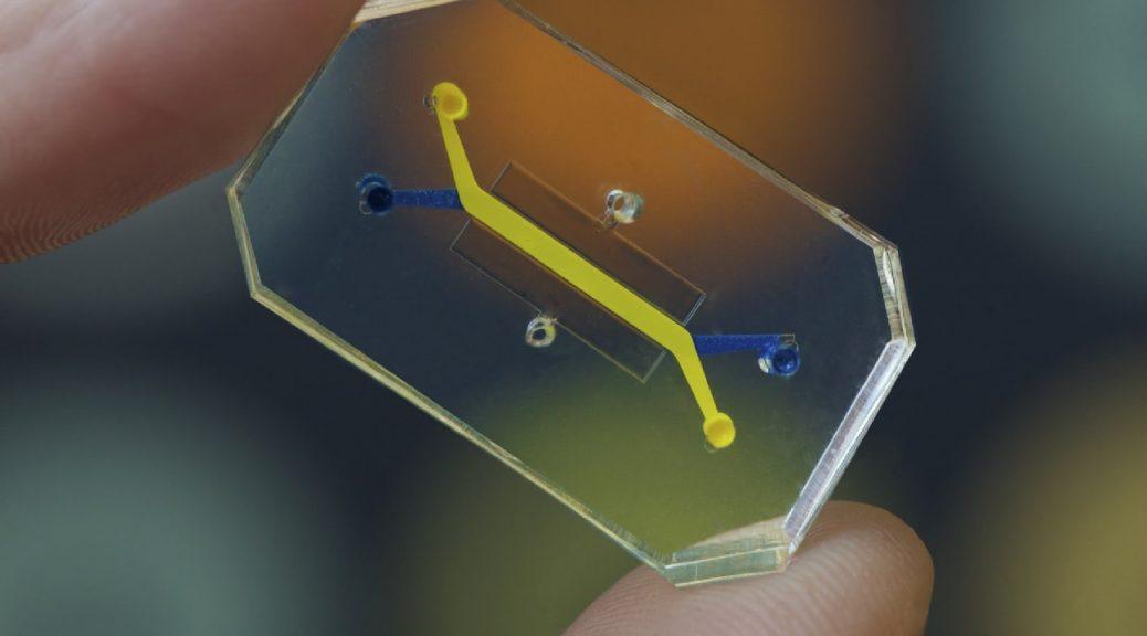 Órganos humanos en chips