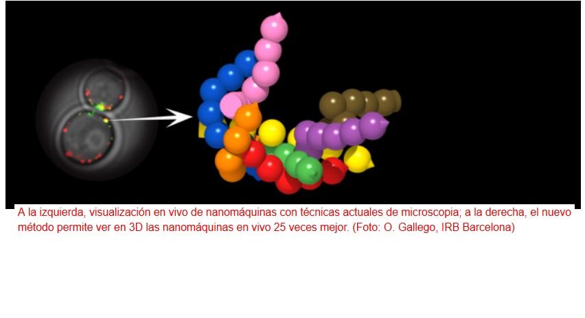 Ven por primera vez en 3D nanomáquinas funcionando dentro de las células