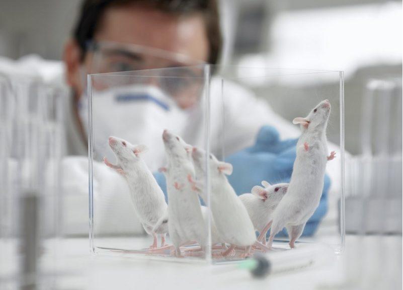 Revierten síntomas similares a Alzheimer en ratones