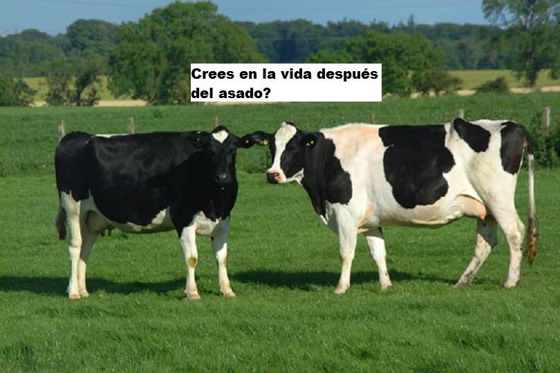 Crean vacas mutantes que son resistentes a la tuberculosis