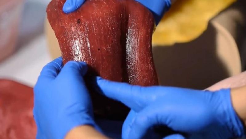Ahora se pueden imprimir órganos que lucen, se sienten y sangran como los reales
