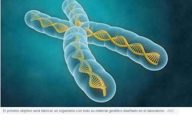 El organismo con más ADN sintético de la historia se acerca a la vida artificial