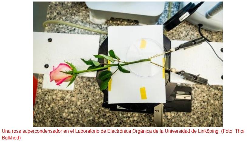 Algún día su jardín de rosas también servirá como batería