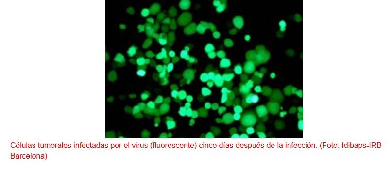 Virus que atacan de forma selectiva a las células tumorales
