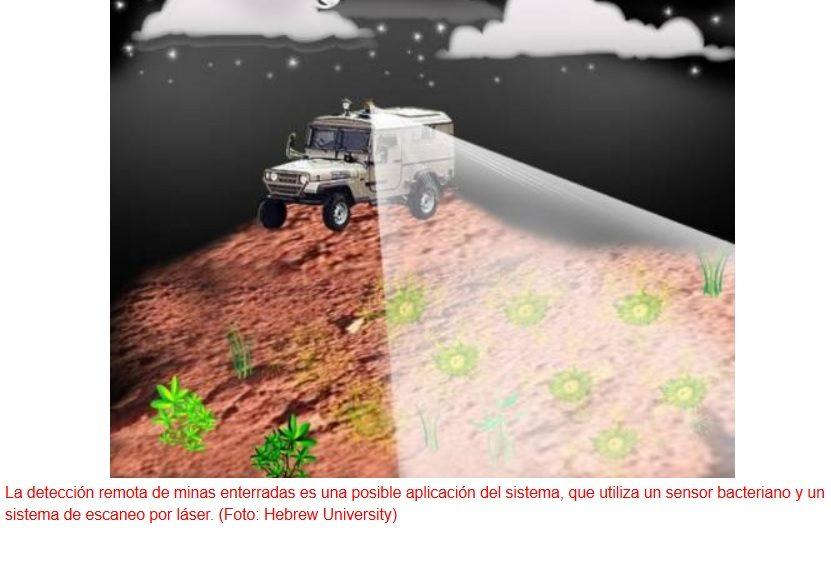 Bacterias para detectar minas enterradas sin detonar
