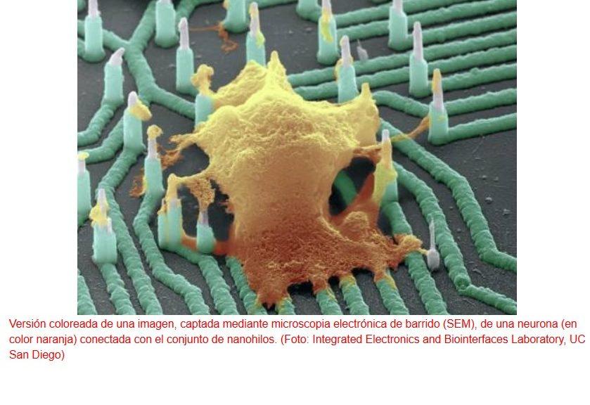 Nuevos nanocables conectables a neuronas individuales