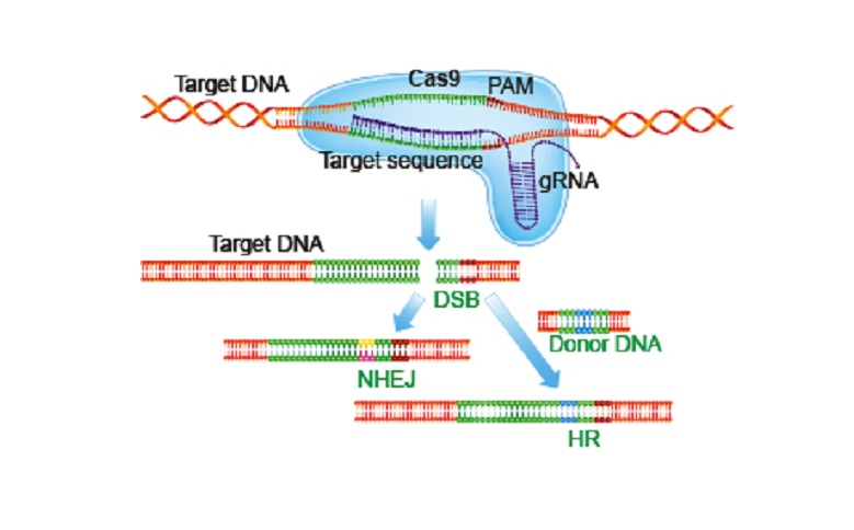 Técnica de edición genética consigue revertir la enfermedad de Huntington