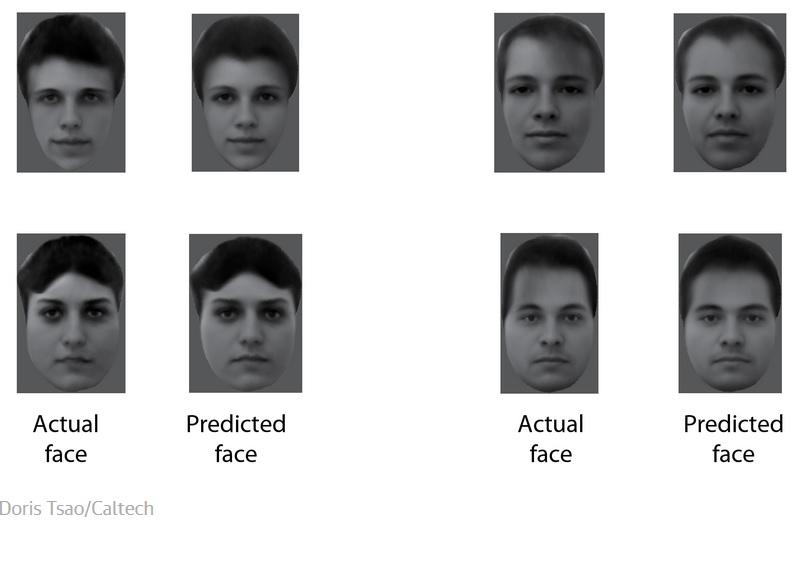 Los científicos ahora saben cómo su cerebro diferencia los rostros