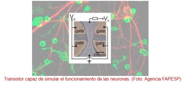 Producen un transistor capaz de simular el funcionamiento de las neuronas