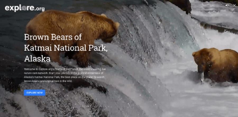Google Earth ahora ofrece videos en vivo y en directo de la naturaleza