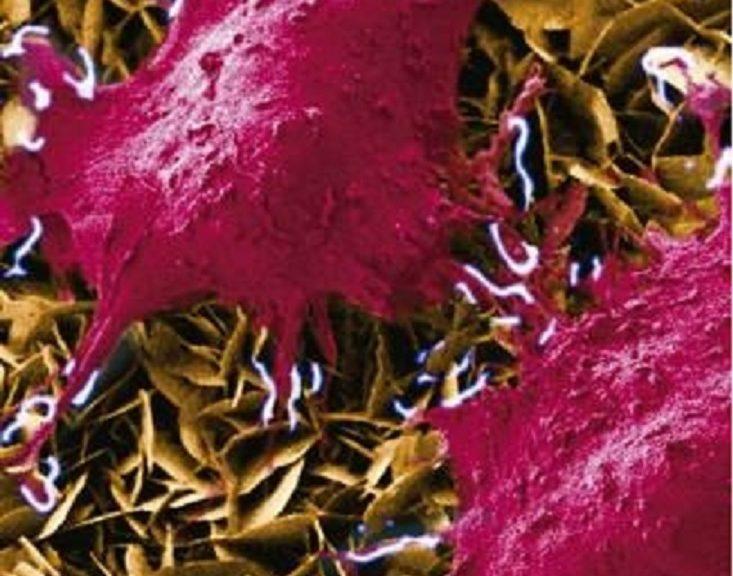 Desarrollan nanogenerador para estimular células vivas