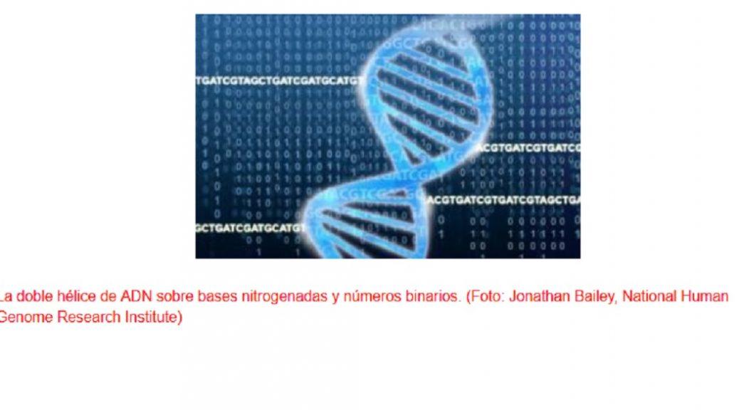 Identifican los genes esenciales en la inmunoterapia contra el cáncer