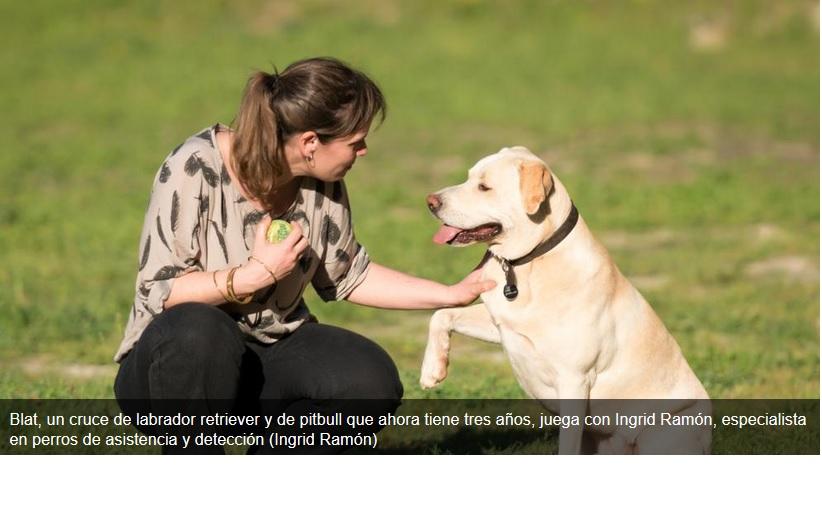 Blat, el perro capaz de diagnosticar un cáncer de pulmón gracias a su olfato