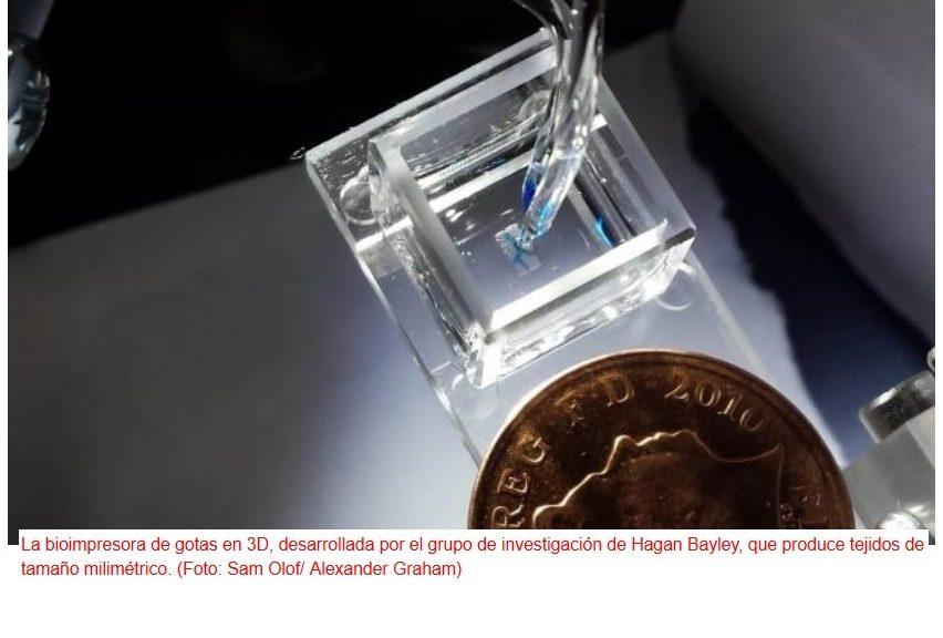 Nuevo método para impresión 3D de tejidos vivos