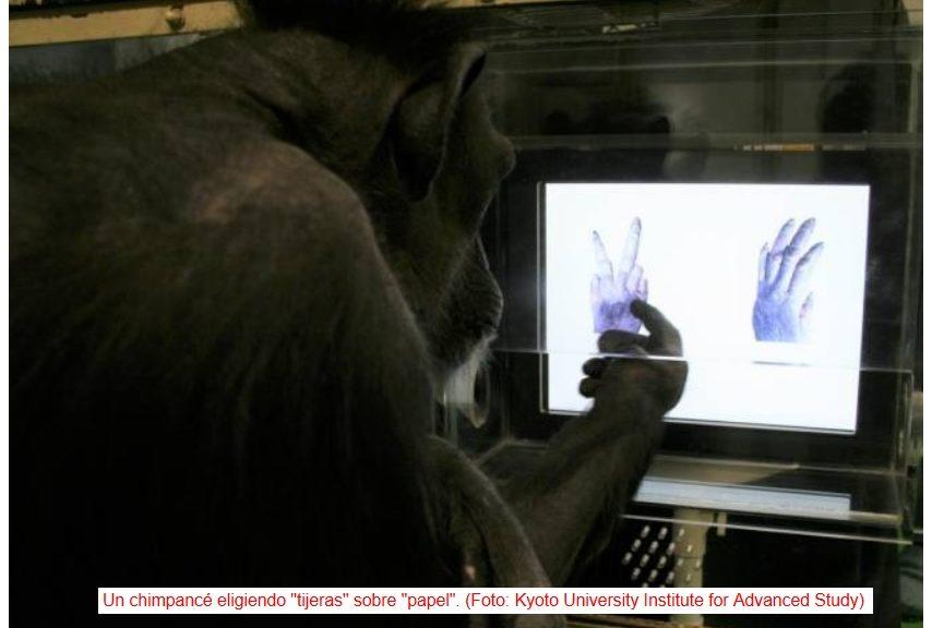 Chimpancés capaces de aprender a jugar a piedra-papel-tijera