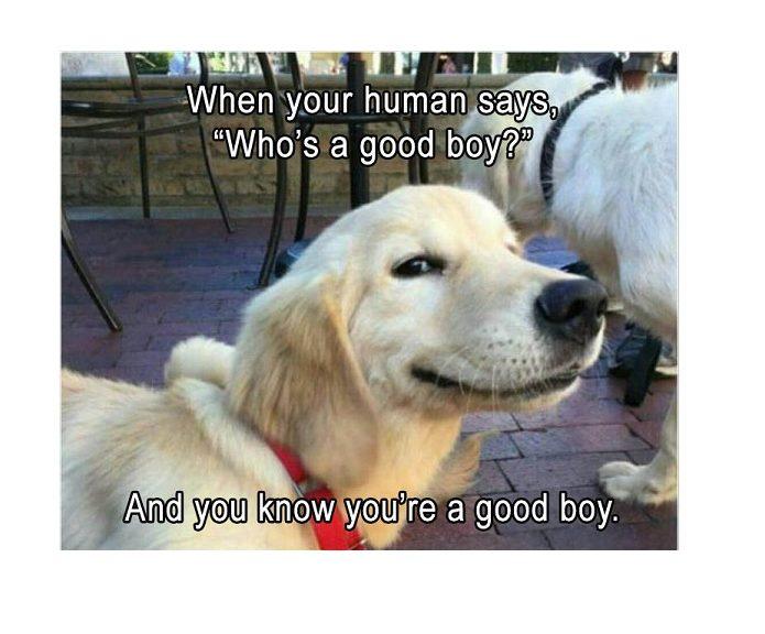 Por qué le quiere tanto su perro