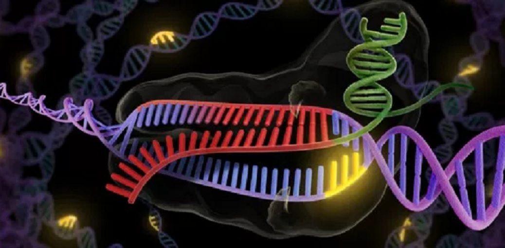 Nueva herramienta CRISPR-Cas logra corregir mutaciones sin cambiar el ADN