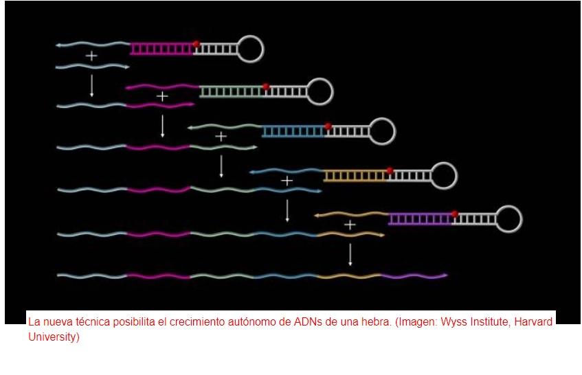 """ADN sintético como material de construcción """"inteligente"""""""