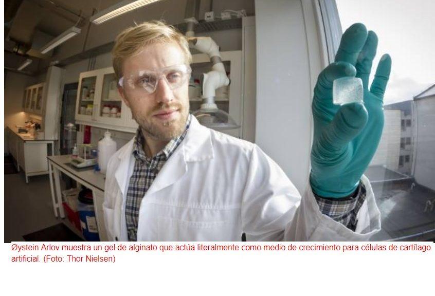 Crean cartílago artificial para tratar la artrosis
