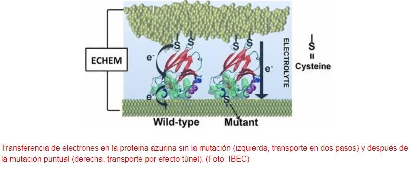 Diseñan un contacto eléctrico con una sola proteína