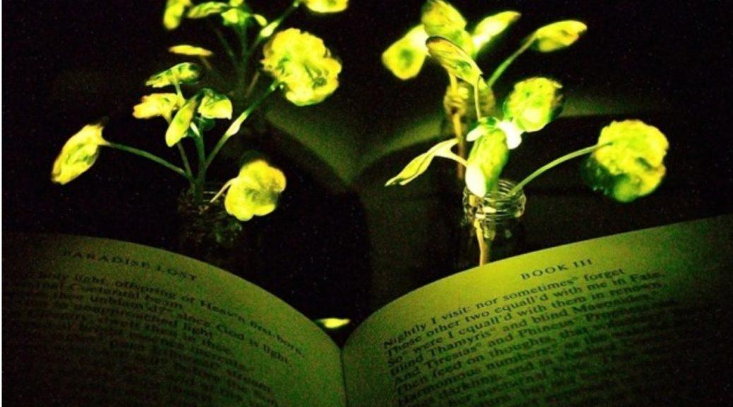 Las lámparas vegetales ya son una realidad