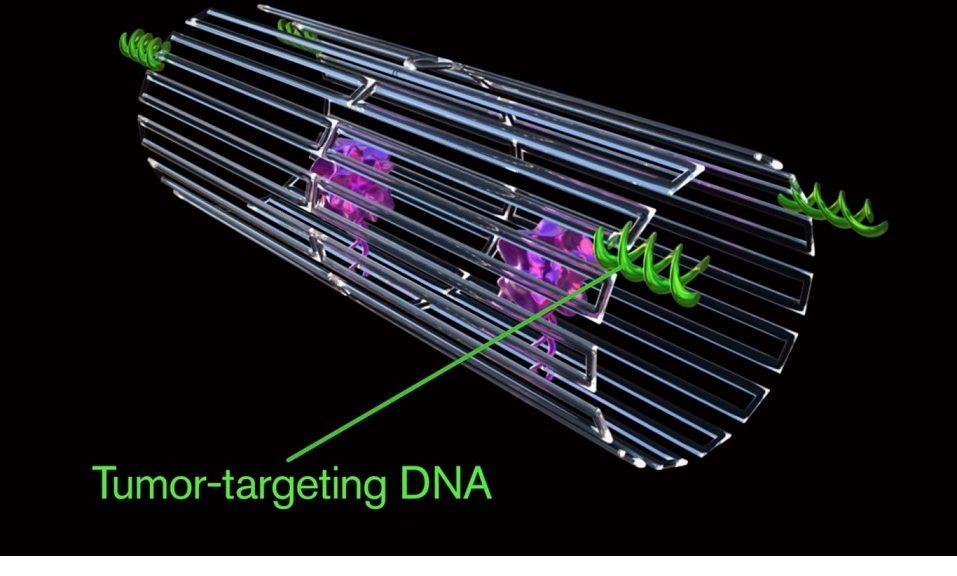 Usan nano-robots de ADN para detectar y eliminar tumores