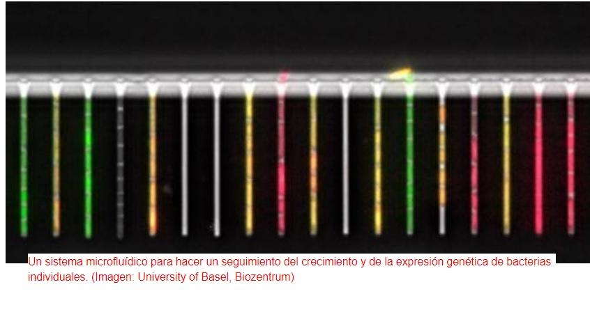 """Crean """"laboratorio en un chip"""" para hacer seguimientos a bacterias individuales"""