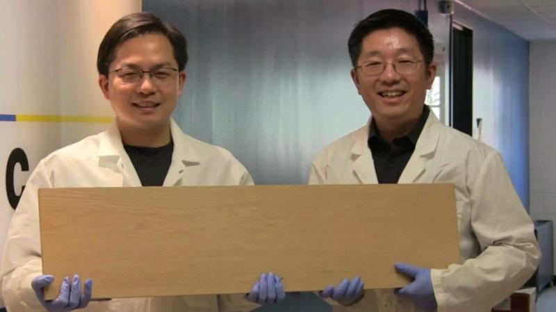 Descubren cómo convertir cualquier madera en un material tan resistente como el acero