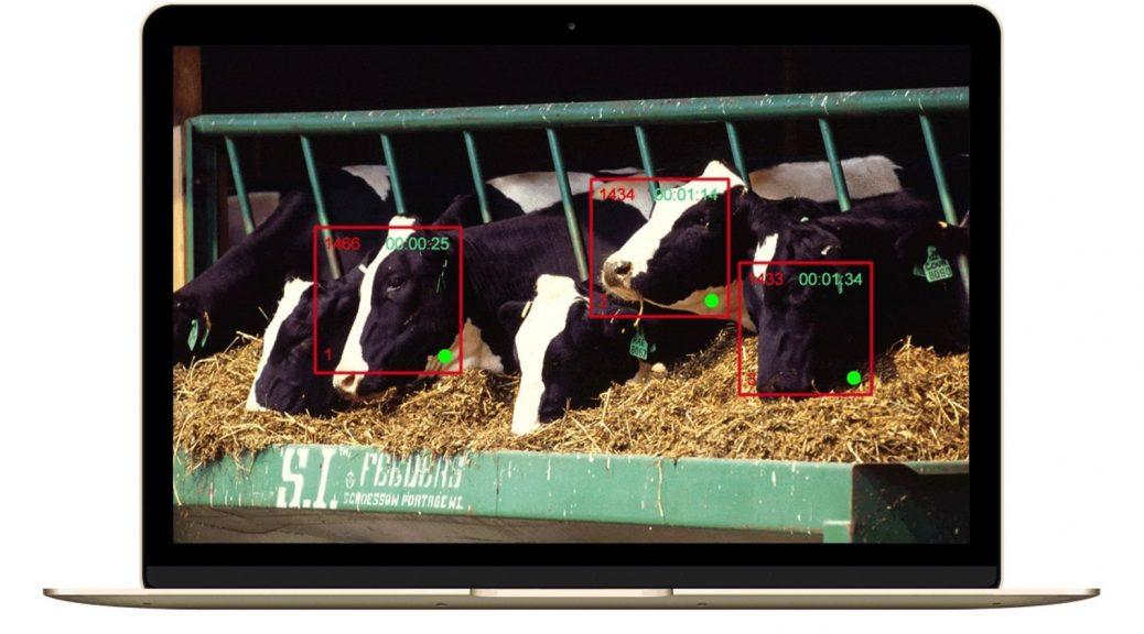 Finalmente, el reconocimiento facial para vacas ha llegado