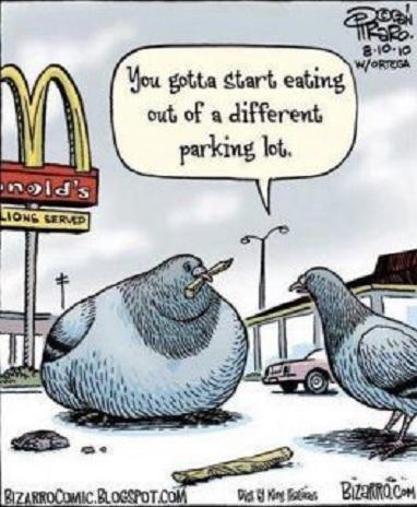 Un nuevo estudio encuentra que el consumo de grasa es la única causa del aumento de peso