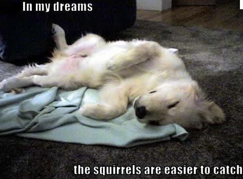 Resultado de imagen de video de perro soñando
